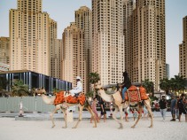 Camels on Jumeirah beach, Dubai Olympus 17mm f1.8 Street photography